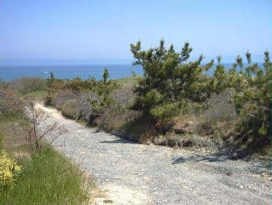 South Wellfleet Cape Cod vacation rental - 175 yards down a path to the beach dunes