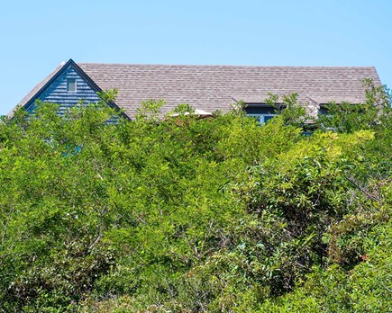 Wellfleet Cape Cod vacation rental - View of house looking up from beach