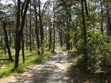 Wellfleet Cape Cod vacation rental - Private road to property