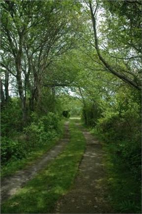 Chatham Cape Cod vacation rental - Path to private beach