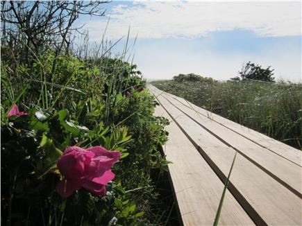 East Orleans Cape Cod vacation rental - Boardwalk is lined with Rosa rugosa and beach grasses