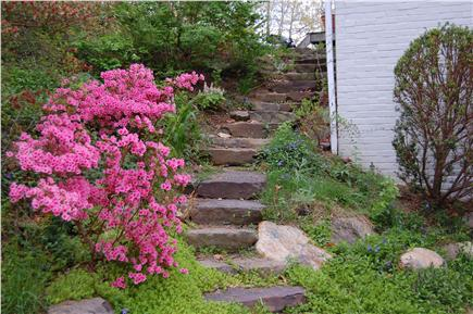 East Orleans Cape Cod vacation rental - Azaleas mark way to garden, outdoor shower & door to laundry rm