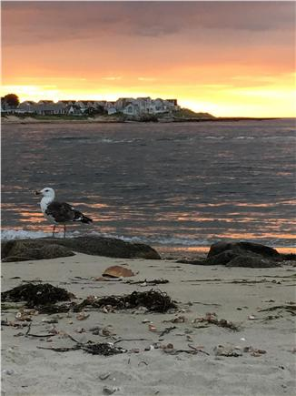 West Dennis Cape Cod vacation rental - Sunrise at neighborhood beach, great swimming for kids