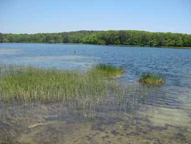 'The Back Woods,'  Wellfleet Cape Cod vacation rental - Horseleech Pond- awful name, great swimming!