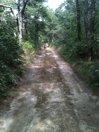 'The Back Woods,'  Wellfleet Cape Cod vacation rental - Sand road leads to beach, a walk past four visible ponds.