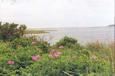 Wellfleet Cape Cod vacation rental - Fort Hill Eastham - one of our favorite walks!