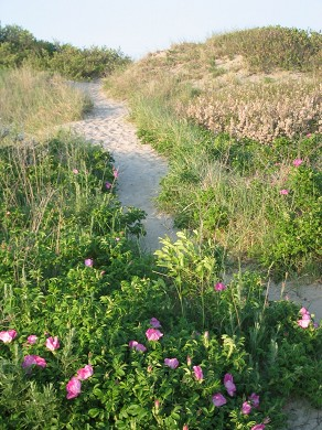 Sandwich, Town Neck Beach and Boardwalk Cape Cod vacation rental - Path to Town Neck Beach