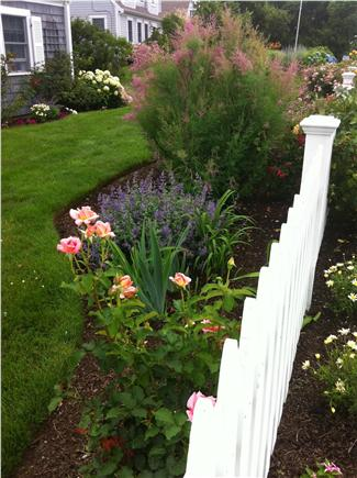 East Dennis/Sesuit Harbor Cape Cod vacation rental - Front yard garden