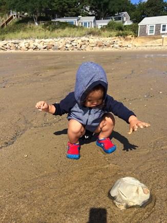Wellfleet Cape Cod vacation rental - Exploring the beach!