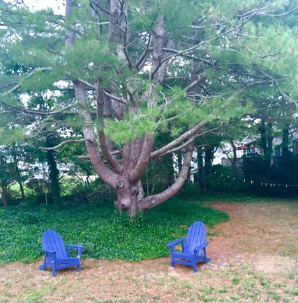 Dennisport Cape Cod vacation rental - Wonderful outdoor space to enjoy your morning coffee