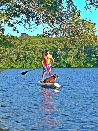 Harwich, MA Cape Cod vacation rental - Paddle boarding fit for man and his beast