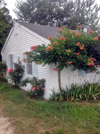 Wellfleet Cape Cod vacation rental - Trumpet vine's time to shine!