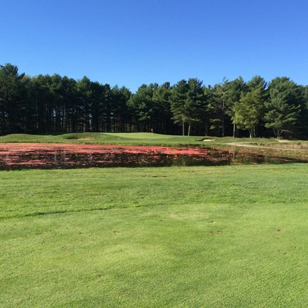 Harwichport Cape Cod vacation rental - Cape Cod golf during cranberry season