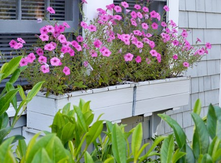New Seabury, Mashpee, Poppy New Seabury vacation rental - Flowers Everywhere!