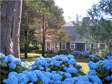 East Orleans Cape Cod vacation rental - View of front of house with gorgeous gardens of hydrangeas