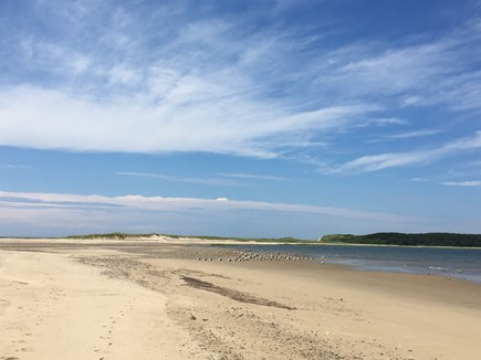 Wellfleet Cape Cod vacation rental - Peaceful bayside beaches less than 2 miles away