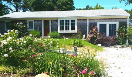 North Truro Cape Cod vacation rental - Summer roses at the cottage