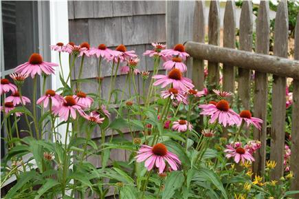 Dennisport Cape Cod vacation rental - Flowers outside of Sun Room