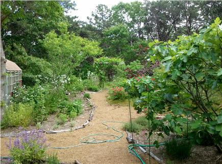 Wellfleet Cape Cod vacation rental - Organic herb, flower and fruit tree garden
