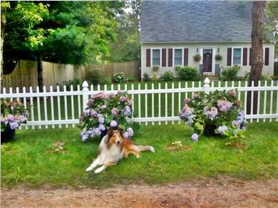East Falmouth Cape Cod vacation rental - PET FRIENDLY Cape House