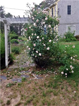 Wellfleet  Cape Cod vacation rental - Rose Arbor in Bloom
