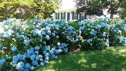 North Dennis Cape Cod vacation rental - Summertime blues