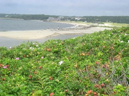 Chatham Cape Cod vacation rental - View Overlooking Rosa Rugosa Shrubs onto Ridgevale Beach