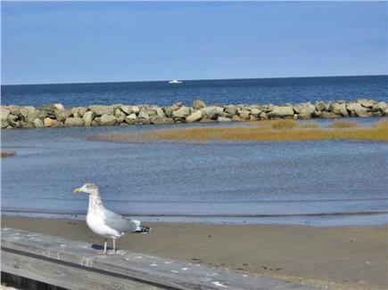 Dennis Cape Cod vacation rental - Walking onto Corporation Beach