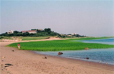 Lieutenant Island, Wellfleet Cape Cod vacation rental - One of the island beaches