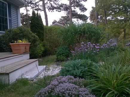 Brewster Cape Cod vacation rental - Fresh herbs for the picking
