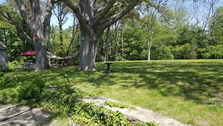 Yarmouth Port Cape Cod vacation rental - One and a third acres for your pooch to run and roam