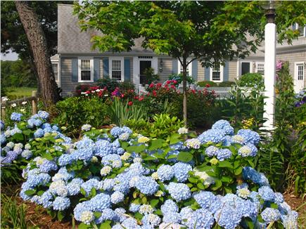 Chatham Cape Cod vacation rental - Chatham Vacation Rental ID 19488
