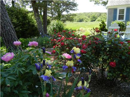Chatham Cape Cod vacation rental - Perennial gardens and Adirondack chairs ovelooking saltmarsh