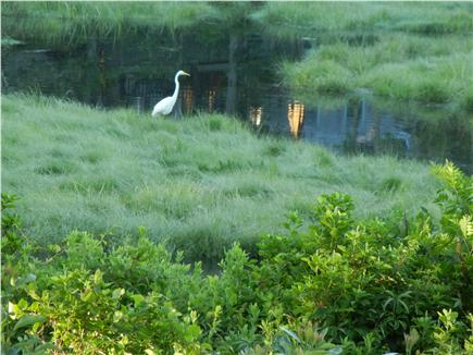 Chatham Cape Cod vacation rental - White Heron in Marsh