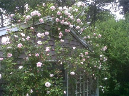 Chatham Cape Cod vacation rental - Chimney House June Roses