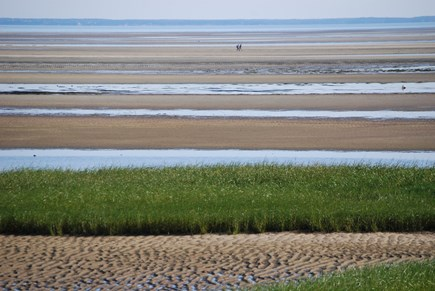 Brewster Cape Cod vacation rental - Walk the famous Brewster flats at low tide