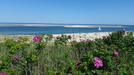Chatham Cape Cod vacation rental - Lighthouse Beach, Fish Pier & Main Street all nearby!