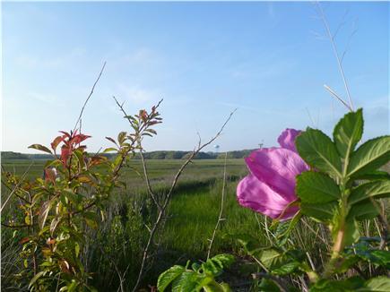West Harwich Cape Cod vacation rental - Beautiful marsh views and rosa rigosa