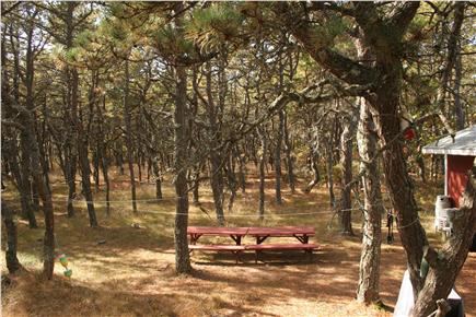 N.Truro Cape Cod vacation rental - Dining outside in the pristine scrub pines. Oh so peaceful!