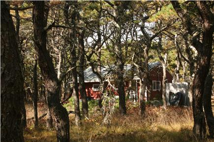 N.Truro Cape Cod vacation rental - View of secluded cottage