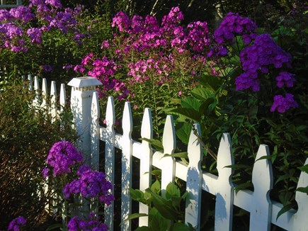 Bourne, Monument Beach Cape Cod vacation rental - Kim's pride and joy lush perineal gardens for you to enjoy.