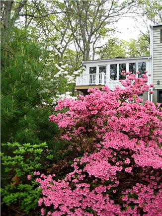 Falmouth Cape Cod vacation rental - Azaleas in Spring
