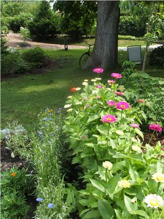 Chatham Cape Cod vacation rental - View of cutting garden and shade tree