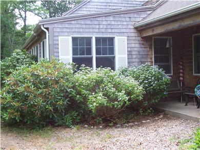 Eastham Cape Cod vacation rental - Flowering bushes next to the farmer's porch.