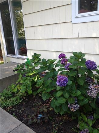 South Yarmouth Cape Cod vacation rental - Nicely landscaped yard