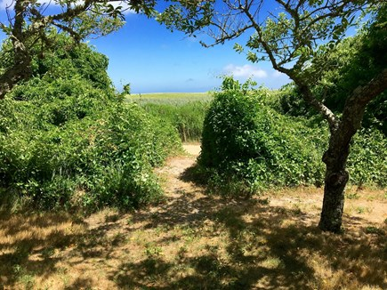 Orleans Cape Cod vacation rental - Walking path to beach from the yard