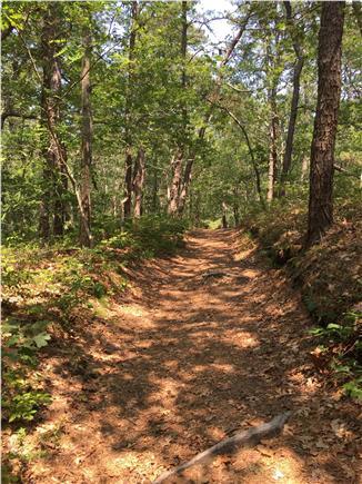 Wellfleet Cape Cod vacation rental - 10 minute walk to Dyer Pond