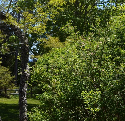 Nauset Heights (East Orleans) Cape Cod vacation rental - Look closely, a patch of ocean blue is visible thru the trees.