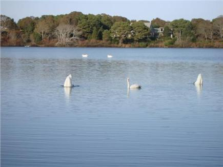 Eastham Cape Cod vacation rental - Enjoy the pond!