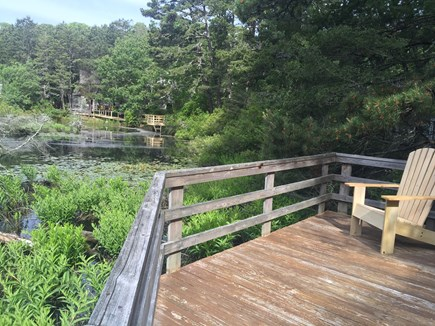 Wellfleet Cape Cod vacation rental - Boardwalk encircles the pond